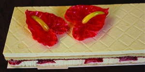 Anthurium gateau